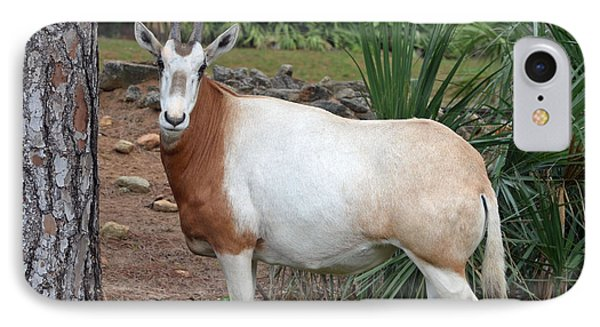 Scimitar Horned Oryx Phone Case by Richard Bryce and Family