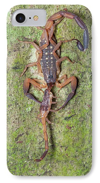 Scorpion With Prey IPhone Case by Melvyn Yeo
