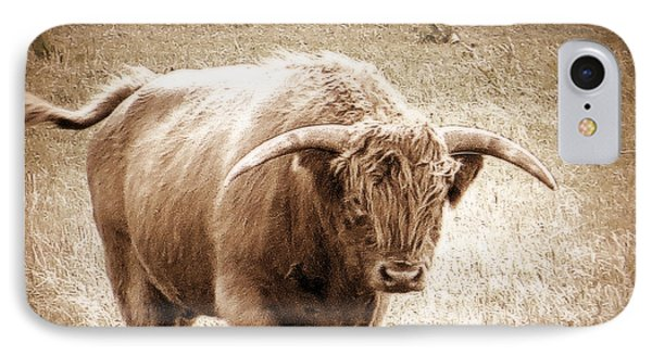 Scottish Highlander Bull IPhone Case by Karen Shackles