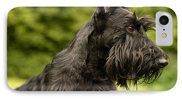 Scottish Terrier IPhone Case by Marvin Blaine