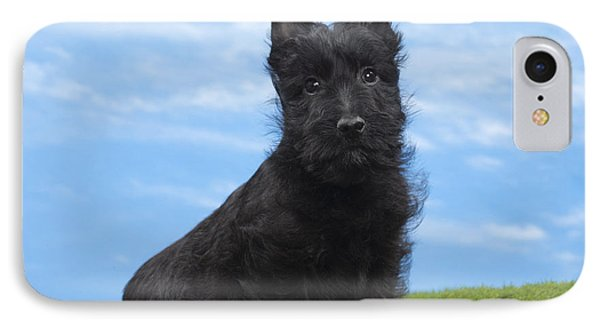 Scottish Terrier Puppy IPhone Case