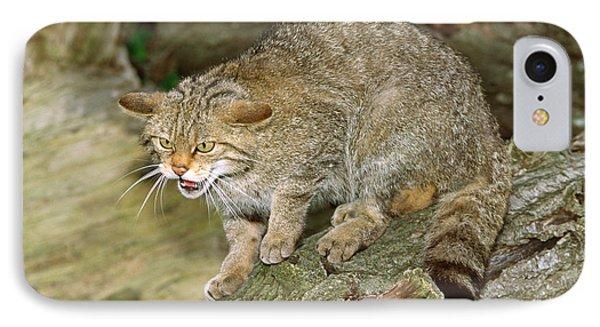 Scottish Wildcat IPhone Case by Nigel Downer