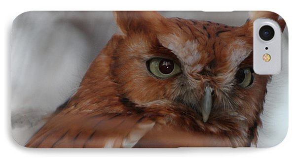 IPhone Case featuring the photograph Screech Owl by Constantine Gregory
