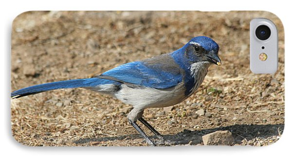 IPhone Case featuring the photograph Scrub Jay by Bob and Jan Shriner