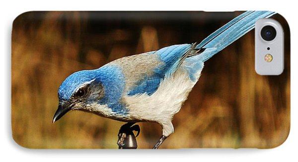 IPhone Case featuring the photograph Scrub Jay by VLee Watson