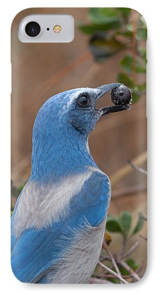 IPhone Case featuring the photograph Scrub Jay With Acorn by Paul Rebmann