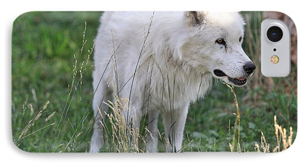 Scruffy White Wolf IPhone Case by Kate Purdy