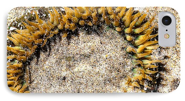 Sea Anenome In The Sand Phone Case by Artist and Photographer Laura Wrede