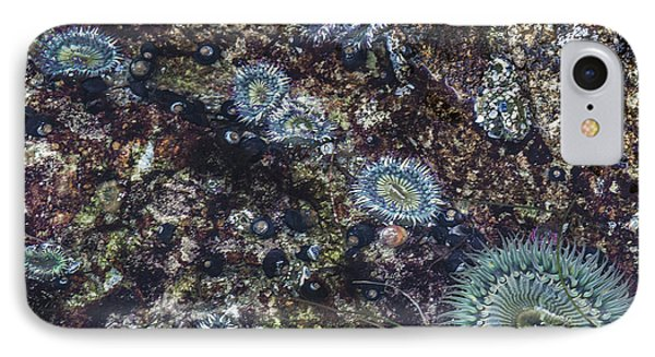 IPhone Case featuring the mixed media Sea Anenome Jewels by Terry Rowe