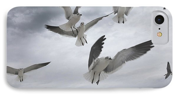 Sea Gull Aggression IPhone Case by Joseph G Holland