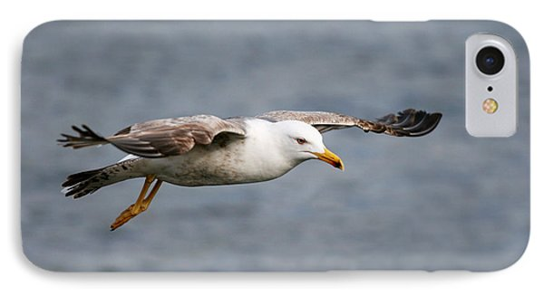 Sea Gull IPhone Case by Charlie Photographer