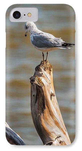 Sea Gull On Driftwood IPhone Case by Paul Freidlund