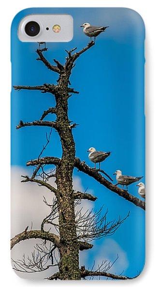 Sea Gulls Hangin Out IPhone Case by Paul Freidlund