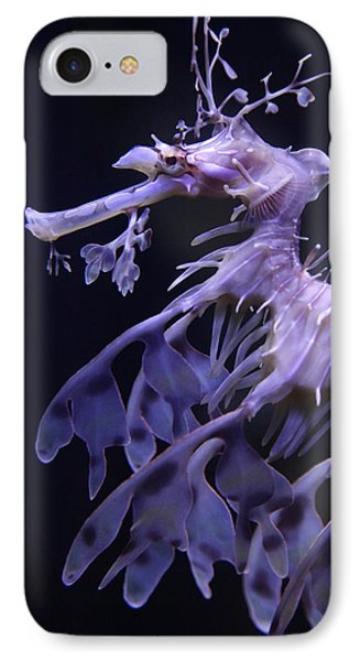 Sea Horse IPhone Case by Donna Corless
