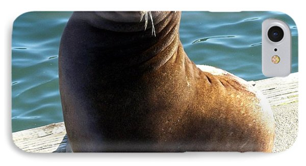IPhone Case featuring the photograph Sea Lion Basking In The Sun by Chalet Roome-Rigdon