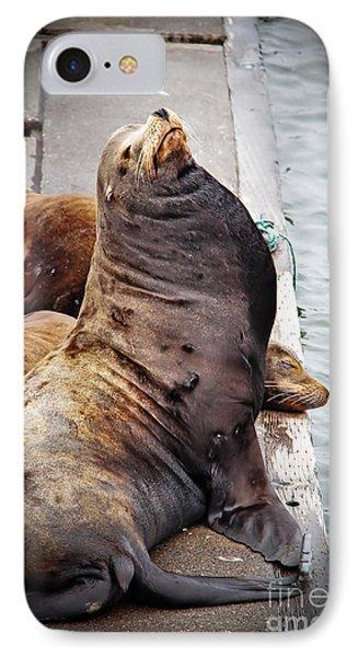 Sea Lion Phone Case by Robert Bales