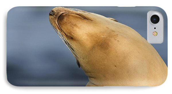 IPhone Case featuring the photograph Sea Lion Stretch by Bryan Keil
