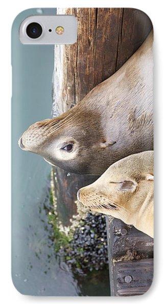 Sea Lions Phone Case by Ashley Balkan