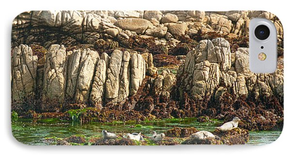 Sea Lions In Monterey Bay Phone Case by Artist and Photographer Laura Wrede