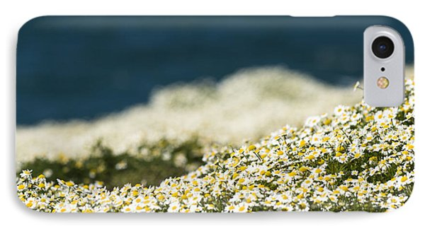 Sea Mayweed And The Sea IPhone Case by Anne Gilbert
