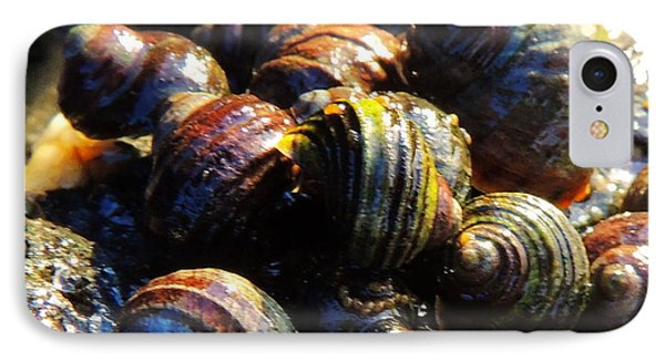 IPhone Case featuring the photograph Sea Shells by Karen Horn