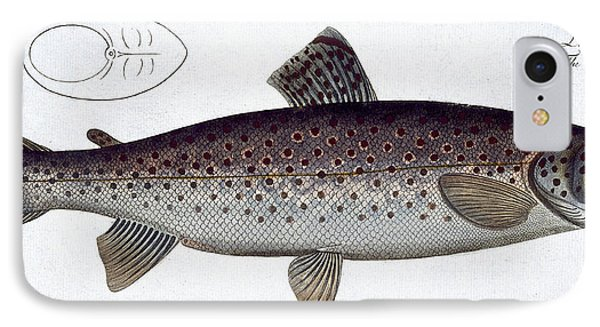 Sea Trout Phone Case by Andreas Ludwig Kruger