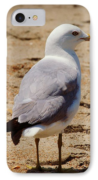 Seagull 3 Series 2 IPhone Case by Kelly Nowak