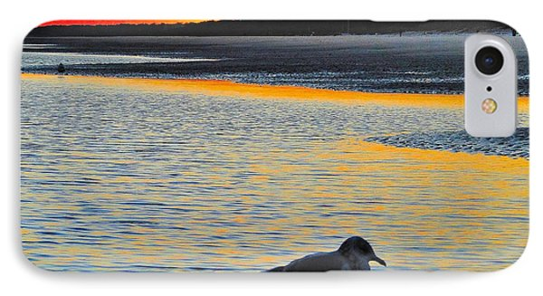 Seagull At Sunset IPhone Case by Cindy Croal