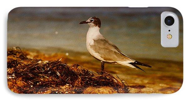 Seagull At The Keys IPhone Case by Deborah Benoit