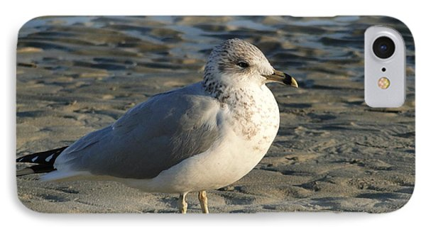 Seagull IPhone Case by Cindy Croal