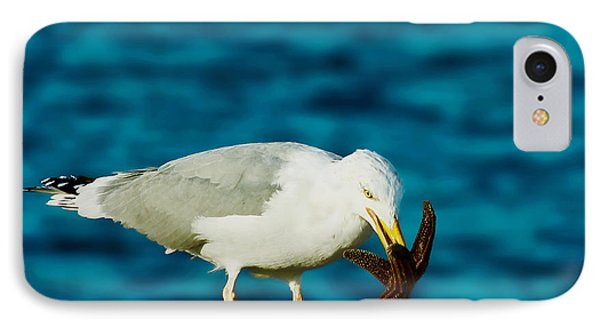 Seagull Dancing With A Star Phone Case by Carol F Austin