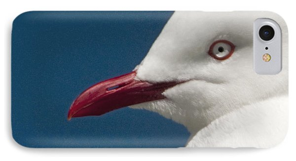 IPhone Case featuring the photograph Seagull by Dennis Cox WorldViews