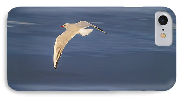 Seagull Flying Low Over Reykjavik IPhone Case by Panoramic Images