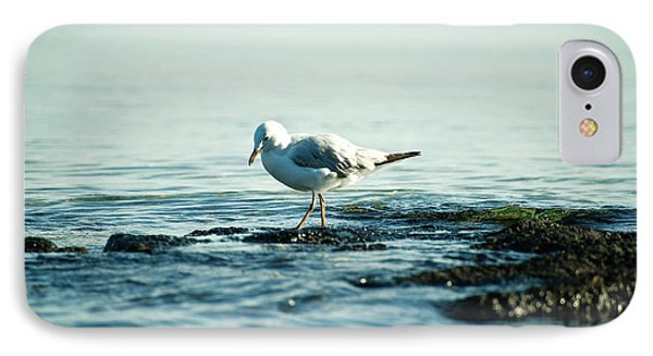 Seagull Hunting IPhone Case by Yew Kwang