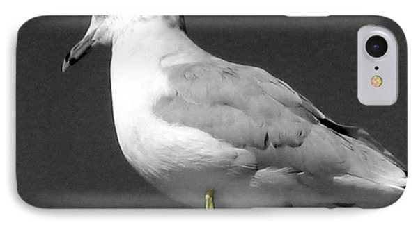 IPhone Case featuring the photograph Seagull In Black And White by Nina Silver