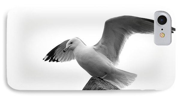 Seagull In Black And White IPhone Case by Todd Soderstrom