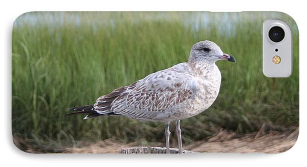 IPhone Case featuring the photograph Seagull by Karen Silvestri