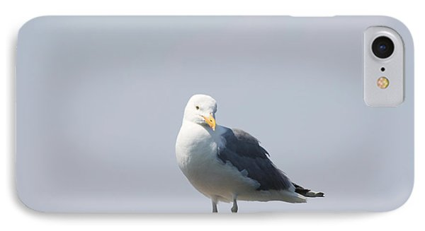 Seagull Looking For Some Food Phone Case by John Telfer