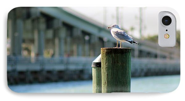 Seagull On The Dock IPhone Case by Nance Larson