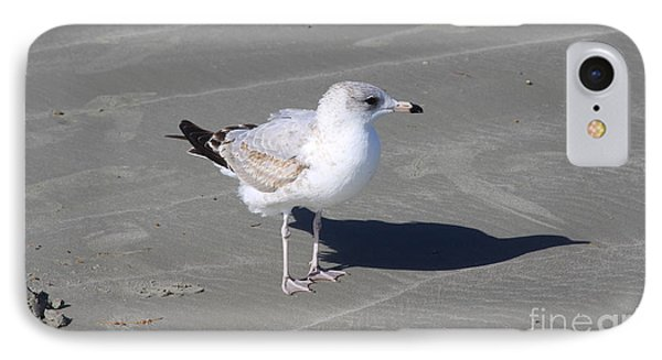 Seagull On The Hunt IPhone Case by Chris Thomas
