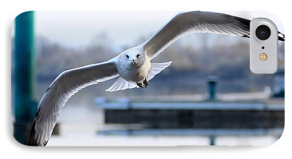 Seagull Over The Pier IPhone Case by Carol Groenen
