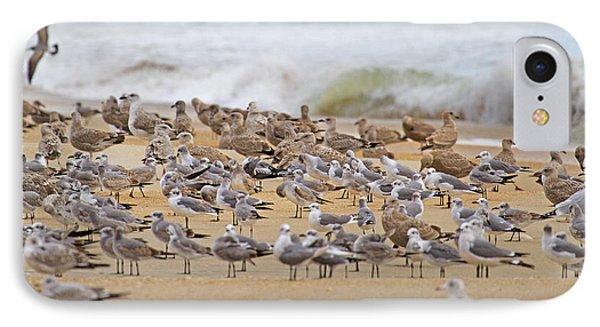 Seagull Paradise IPhone Case