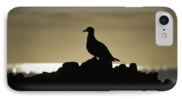 Seagull Silhouette IPhone Case by David Daniel Adventures