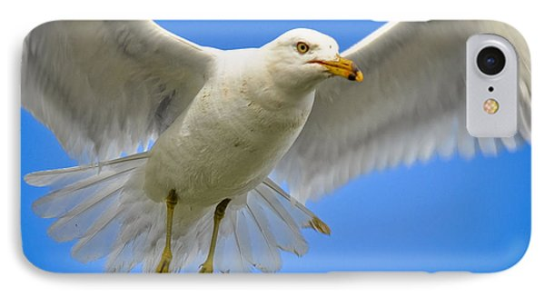 IPhone Case featuring the photograph Seagull Wings by Gina Savage