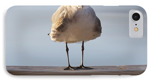 Seagull With An Attitude  IPhone Case by Mike McGlothlen