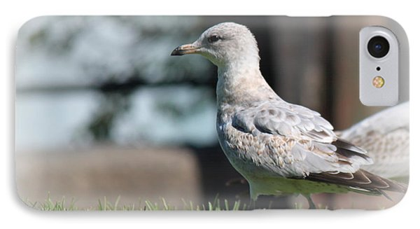 Seagulls 1 IPhone Case
