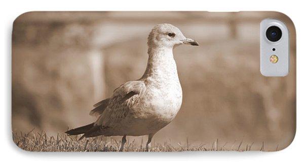 Seagulls 2 IPhone Case