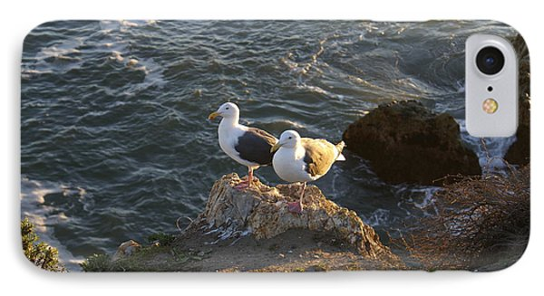 Seagulls Aka Pismo Poopers Phone Case by Barbara Snyder