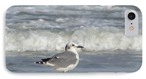 Seagulls At Fernandina 6 IPhone Case by Cathy Lindsey