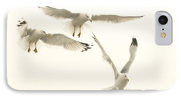 Seagulls Flight IPhone Case by Raymond Earley